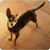 Adopt A Pet :: SANCHO - Gilbert, AZ