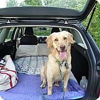 Adopt A Pet :: Logan - Fort Hunter, NY