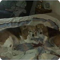Adopt A Pet :: Penny & Buddy (Courtesy) - Indianapolis, IN