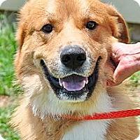Adopt A Pet :: Tucker - New Canaan, CT