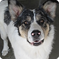 Adopt A Pet :: Pretty - Buffalo, WY
