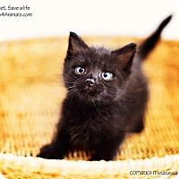 Adopt A Pet :: Liam - Xenia, OH
