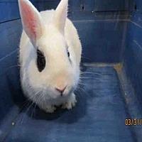 Adopt A Pet :: CRICKET - Santa Maria, CA