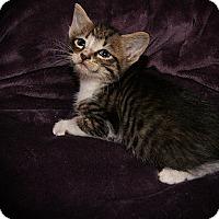 Adopt A Pet :: Samantha - Monroe, NC