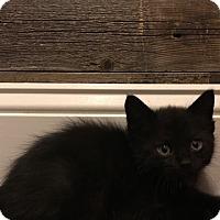 Adopt A Pet :: Prometheus - Colorado Springs, CO