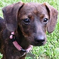 Adopt A Pet :: Charlotte Chevy - Houston, TX