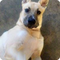 Adopt A Pet :: Migo - Lebanon, ME