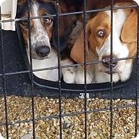 Adopt A Pet :: Momz and Molly Ann - Boston, MA