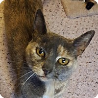 Adopt A Pet :: Sassafras (Sassy) - Plain City, OH