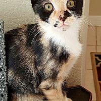 Adopt A Pet :: Aurora - Tampa, FL