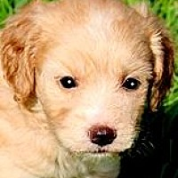 Adopt A Pet :: NASH(OUR
