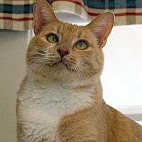 Adopt A Pet :: Noah - Gaithersburg, MD