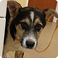 Adopt A Pet :: Simon - Lancaster, OH