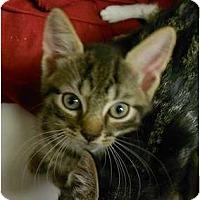 Adopt A Pet :: Daniel - Maywood, NJ