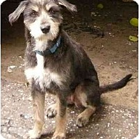Adopt A Pet :: Missy - Miami Beach, FL