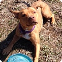 Adopt A Pet :: Ember - Spring City, PA