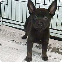 Adopt A Pet :: Cinder - Philadelphia, PA