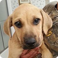 Adopt A Pet :: Buttercup - Marshfield, MA