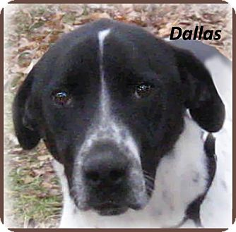 Border Collie/Foxhound Mix Dog for adoption in Marlborough, Massachusetts - Dallas- Loves Kids!
