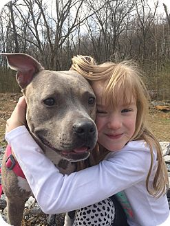 American Staffordshire Terrier Mix Dog for adoption in nashville, Tennessee - Collette