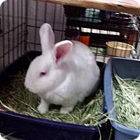 Adopt A Pet :: Catherine and Georgie Girl - Williston, FL