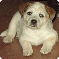 Adopt A Pet :: Nora - Phoenix, AZ