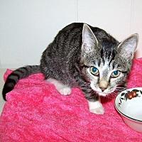Adopt A Pet :: Ariel - Framingham, MA