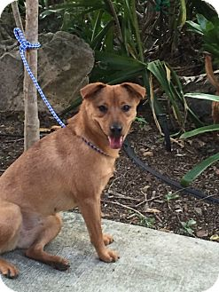 Terrier (Unknown Type, Medium) Mix Dog for adoption in Washington, Pennsylvania - Delta