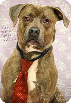 Mastiff Mix Dog for adoption in Newnan City, Georgia - Hank