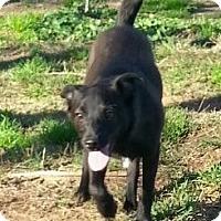 Adopt A Pet :: Betsy - Jefferson, TX