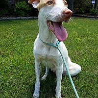 Adopt A Pet :: Peaches - Memphis, TN
