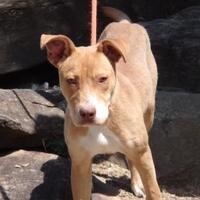 Adopt A Pet :: Daniel - Tiger, GA