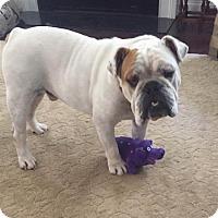 Adopt A Pet :: Buster - Ashland, VA