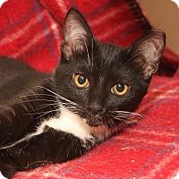 Adopt A Pet :: RJ (Royal Jackpot) - Yorba Linda, CA