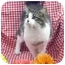 Photo 1 - Domestic Longhair Cat for adoption in Newland, North Carolina - Brady