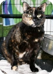 Calico Cat for adoption in East Stroudsburg, Pennsylvania - S-Momma