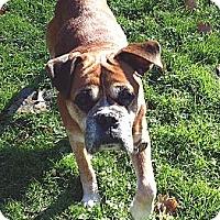 Adopt A Pet :: Keeper - Sunderland, MA