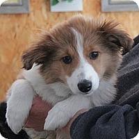 Adopt A Pet :: Winnie - Minneapolis, MN