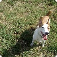 Adopt A Pet :: sarge - Inola, OK