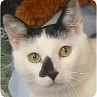 Adopt A Pet :: Jackson - Deer Park, NY