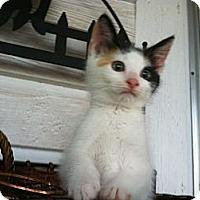 Adopt A Pet :: Cali - Monroe, GA