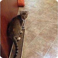 Adopt A Pet :: Joye - Mobile, AL