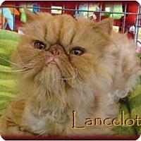Adopt A Pet :: Lancelot - Beverly Hills, CA