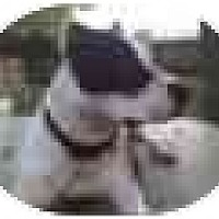 Adopt A Pet :: Rascal - Hoffman Estates, IL