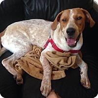 Adopt A Pet :: Saul - Leesburg, VA