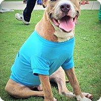 Adopt A Pet :: Finnegan - Orlando, FL