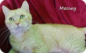 Domestic Shorthair Cat for adoption in Edwards AFB, California - Meowy