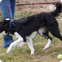 Adopt A Pet :: Holly - Lebanon, CT