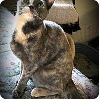 Adopt A Pet :: Tallon - Fairborn, OH