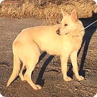 Adopt A Pet :: Paloma - Fort Worth, TX